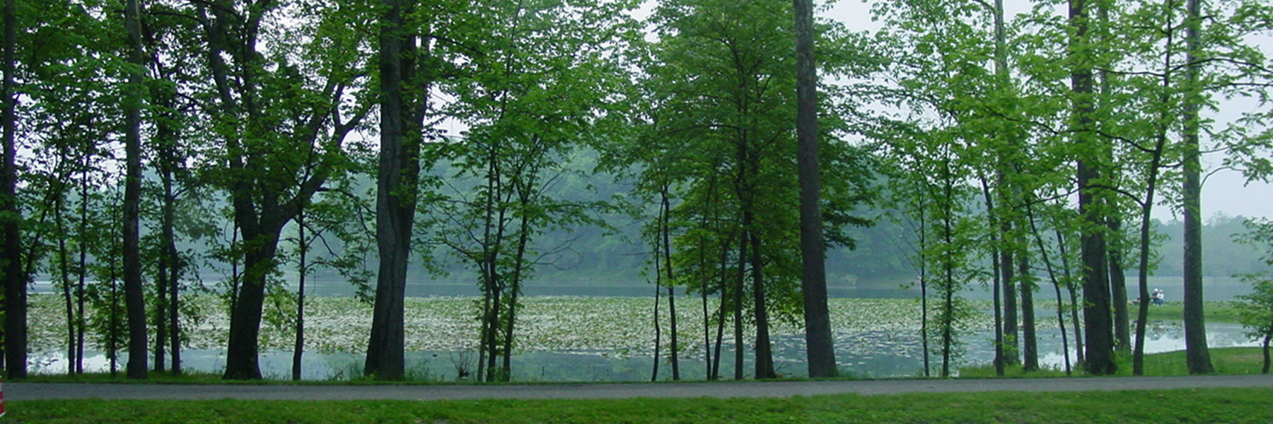 Path View of Trees and Lake